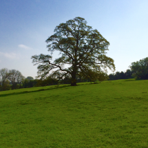 The Oak Tree on Rabbit Hill